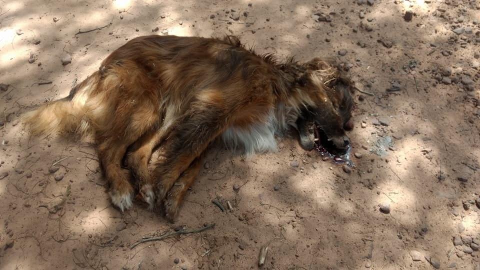 Municipio de Puerto Tirol aclara sobre el caso de  perros muertos