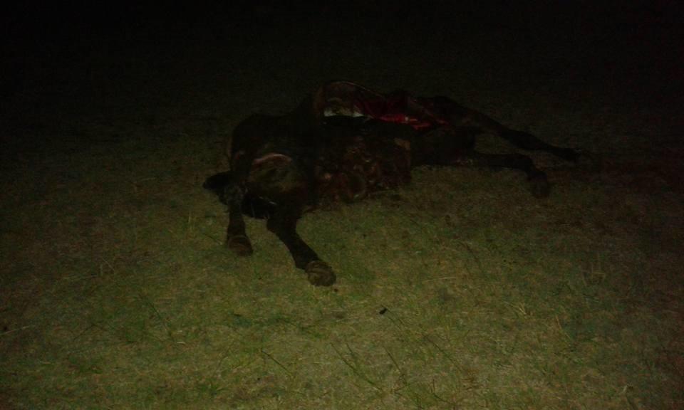 Acceso a Goya: accidente entre fatal entre moto y equino