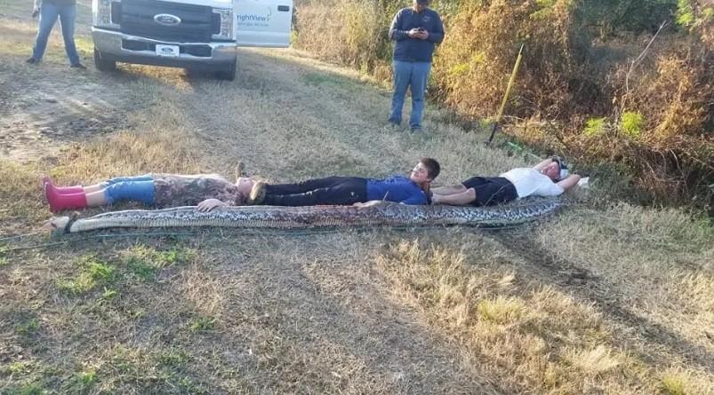 Familia captura una PITÓN embarazada de casi 5 metros