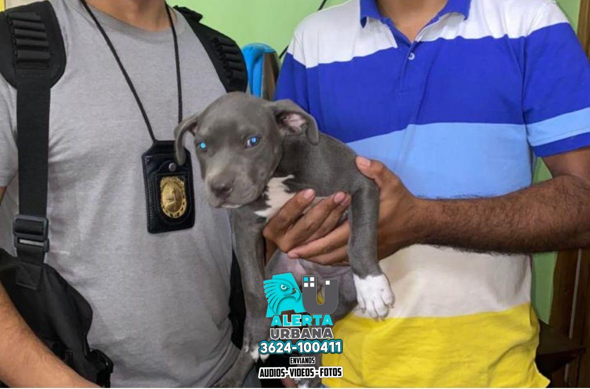 Villa Ángela: sustrajeron una perra de una vivienda y fue recuperada