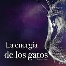 La energía de los Gatos