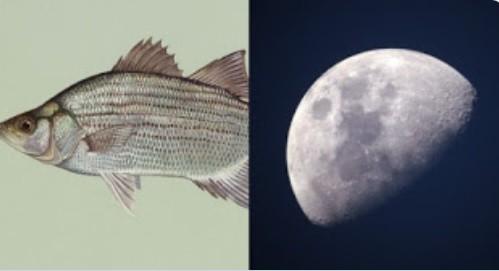 La NASA creó un plan para criar peces en la Luna