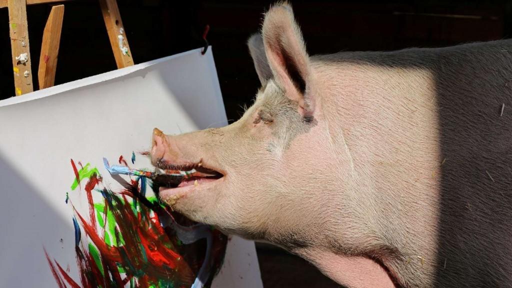 Un chancho apodado Pigcasso, pinta cuadros y lleva recaudado $70.000 dólares