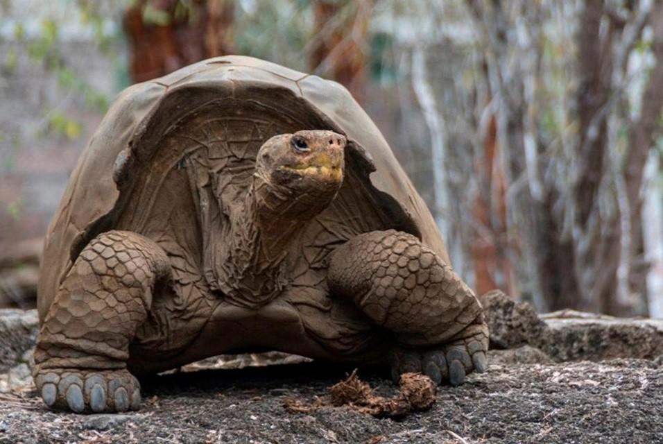 Transportaban 185 tortugas en una valija
