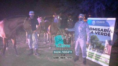 Equinos que deambulaban por la vía pública fueron secuestrados