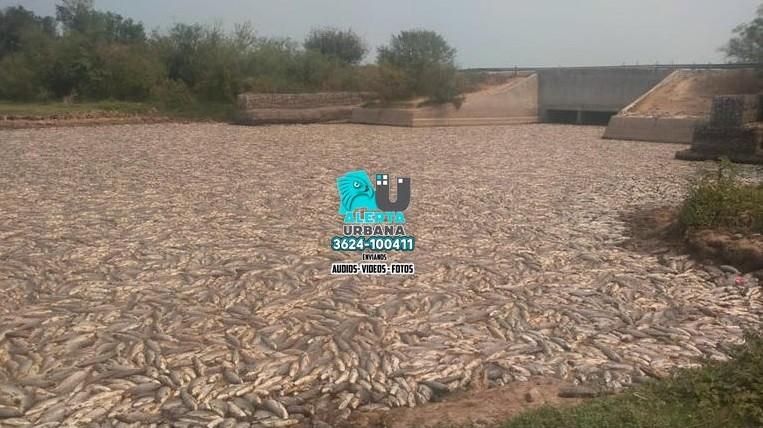 Junín: miles de peces muertos aparecieron en una laguna local