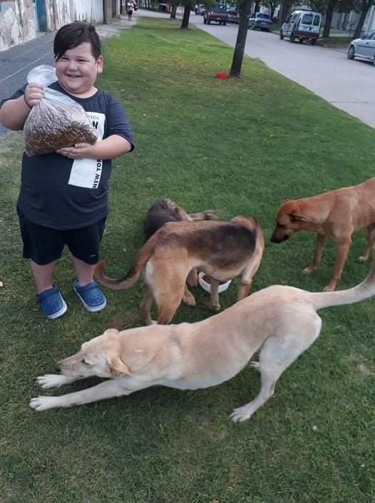 Bauti, el niño que organizó una colecta en su barrio y compró alimento para perros callejeros