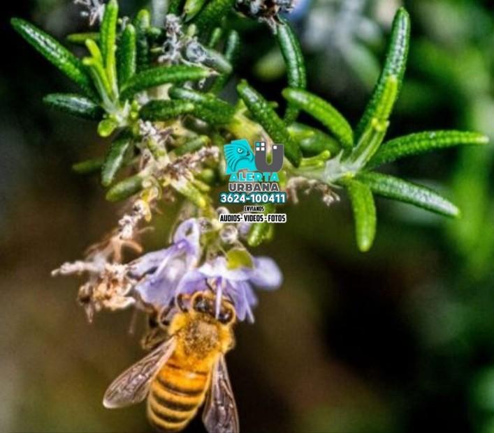Los parques solares pueden salvar a las abejas de la extinción