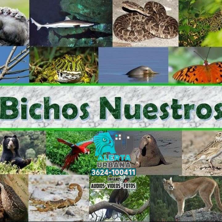 Chaco: la caza y muerte del tapir es noticias nacional