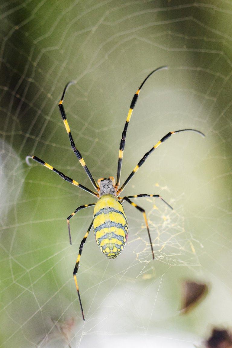 Una tela arañana se puede convertir en una partitura musical de verdad
