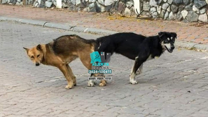 No seamos brutos, no separes a las mascotas cuando copulan