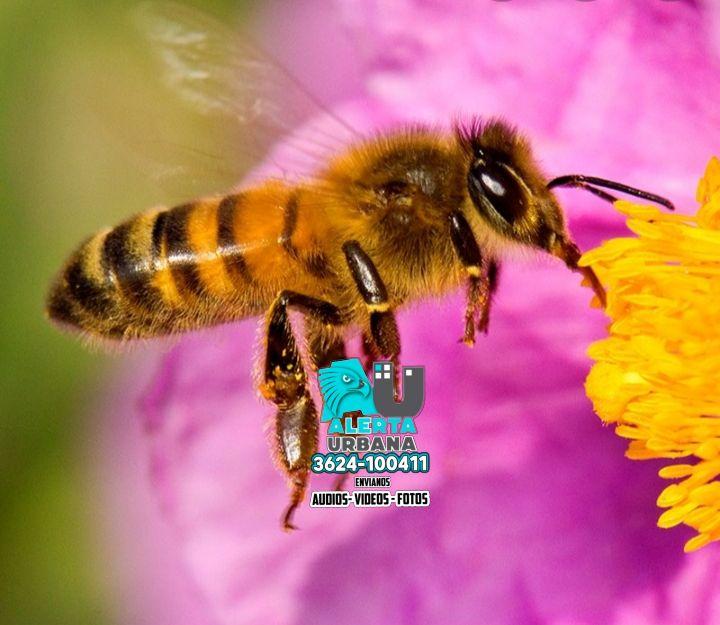 Día mundial de las abejas
