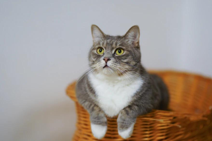 Cuáles son las cinco cosas que los gatos odian de las personas