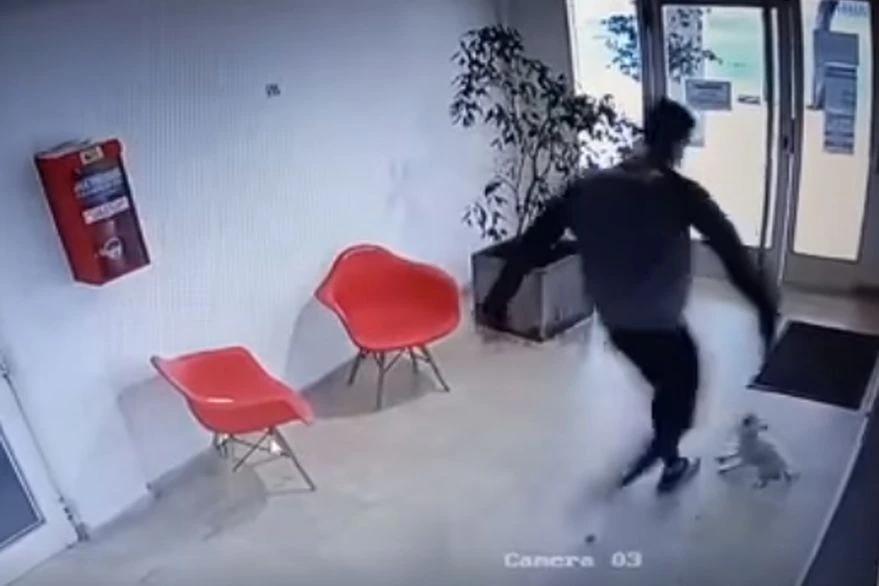 Un hombre golpeó brutalmente a una perra caniche y le abrieron una investigación penal