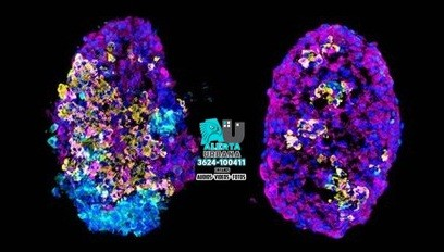 Secuenciación genética, una herramienta indispensable para rastrear a los virus
