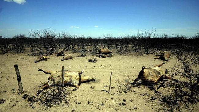 Argentina se unió a la campaña mundial contra el cambio climático
