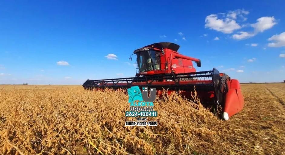 La cosecha de soja finalizó con una producción de 43,7 millones de toneladas