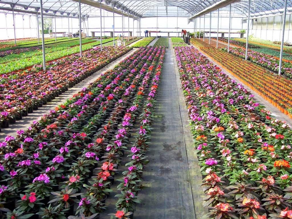 El Centro Biotecnológico Agroforestal y su importante tarea durante la pandemia