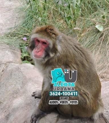 China: murió un hombre por raro virus que se contagió de monos