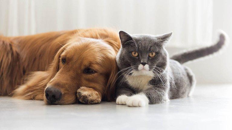 ¿Perros o gatos? Qué animales son más susceptibles al coronavirus