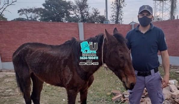 Detenido por maltrato animal