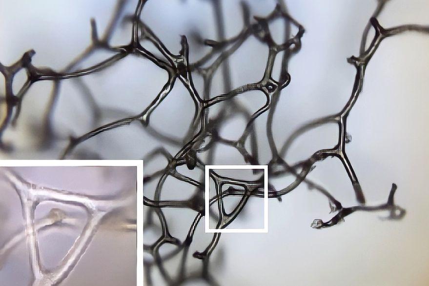 Unas esponjas marinas de hace 890 millones de años podrían ser el primer animal que habitó la Tierra