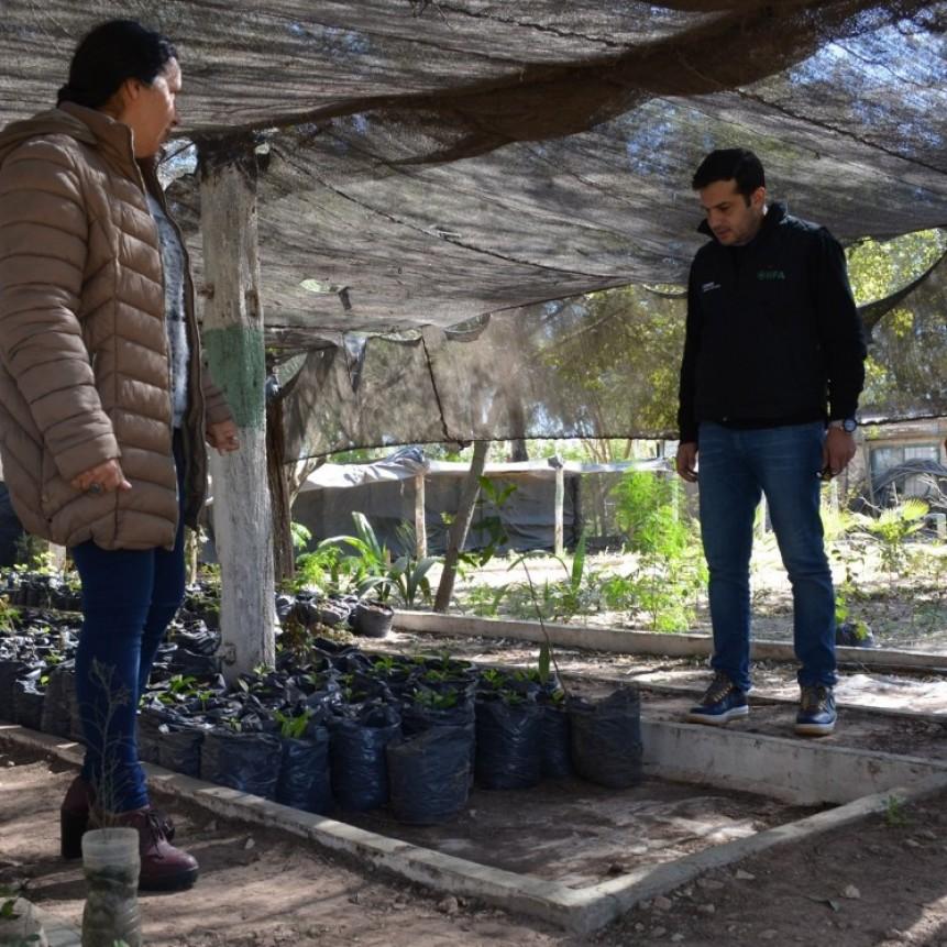 IFA y el Municipio de Charata trabajan en la reanudación del programa arbolado