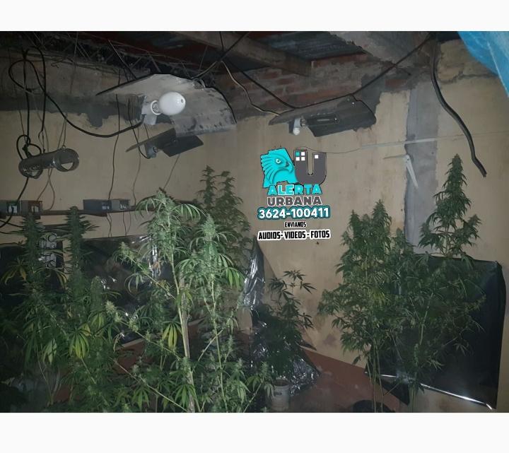 Un incendio dejó al descubierto un laboratorio de cultivo de marihuana