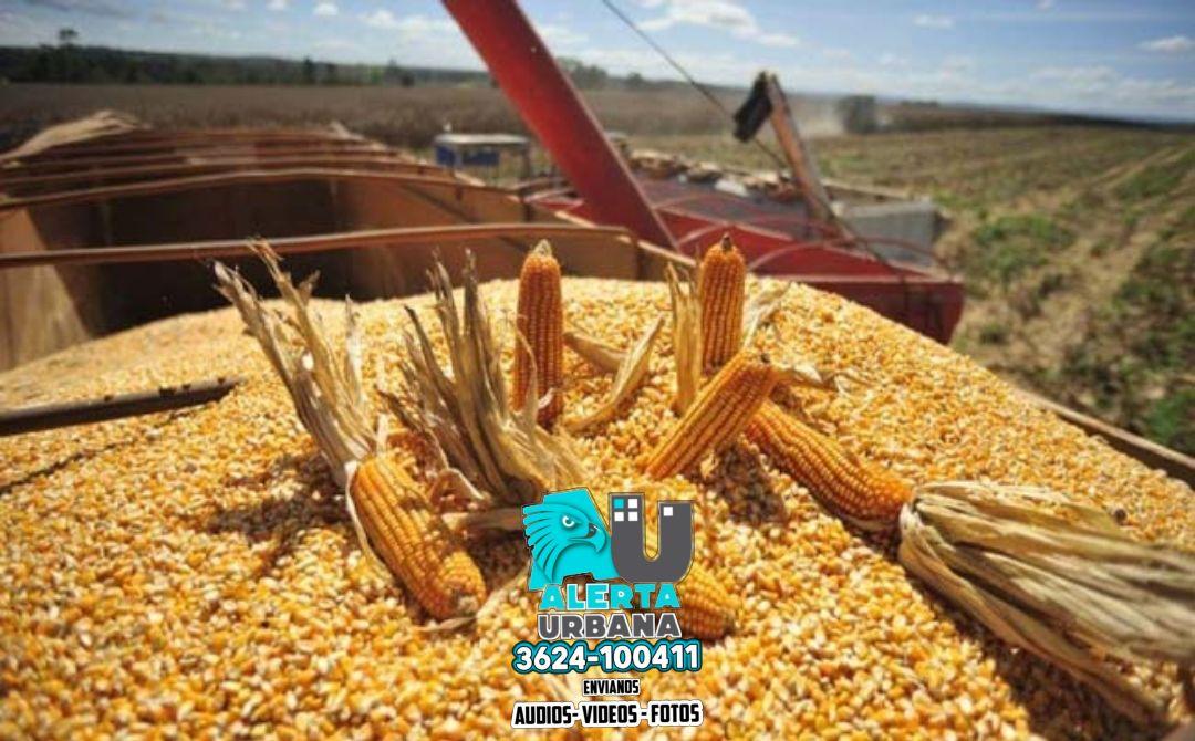 Récord de 60,5 millones de toneladas, en el cierre de cosecha de maíz