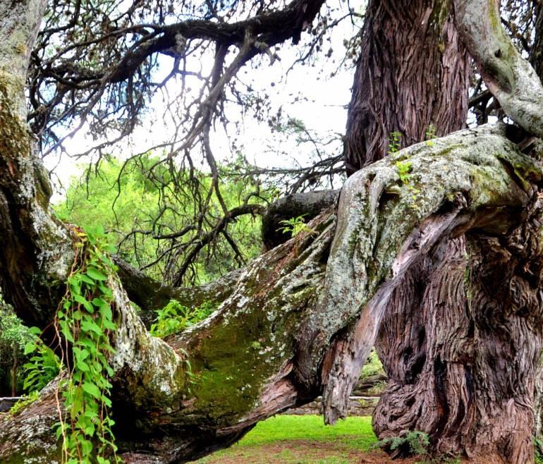 """El """"algarrobo abuelo"""", un guardián de historias y un refugio de monte nativo"""