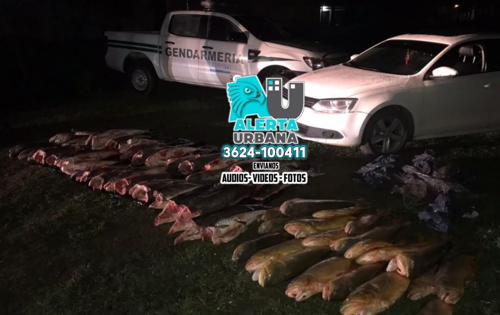 Gendarmes interceptan carga con más de 600 kilos de pescados