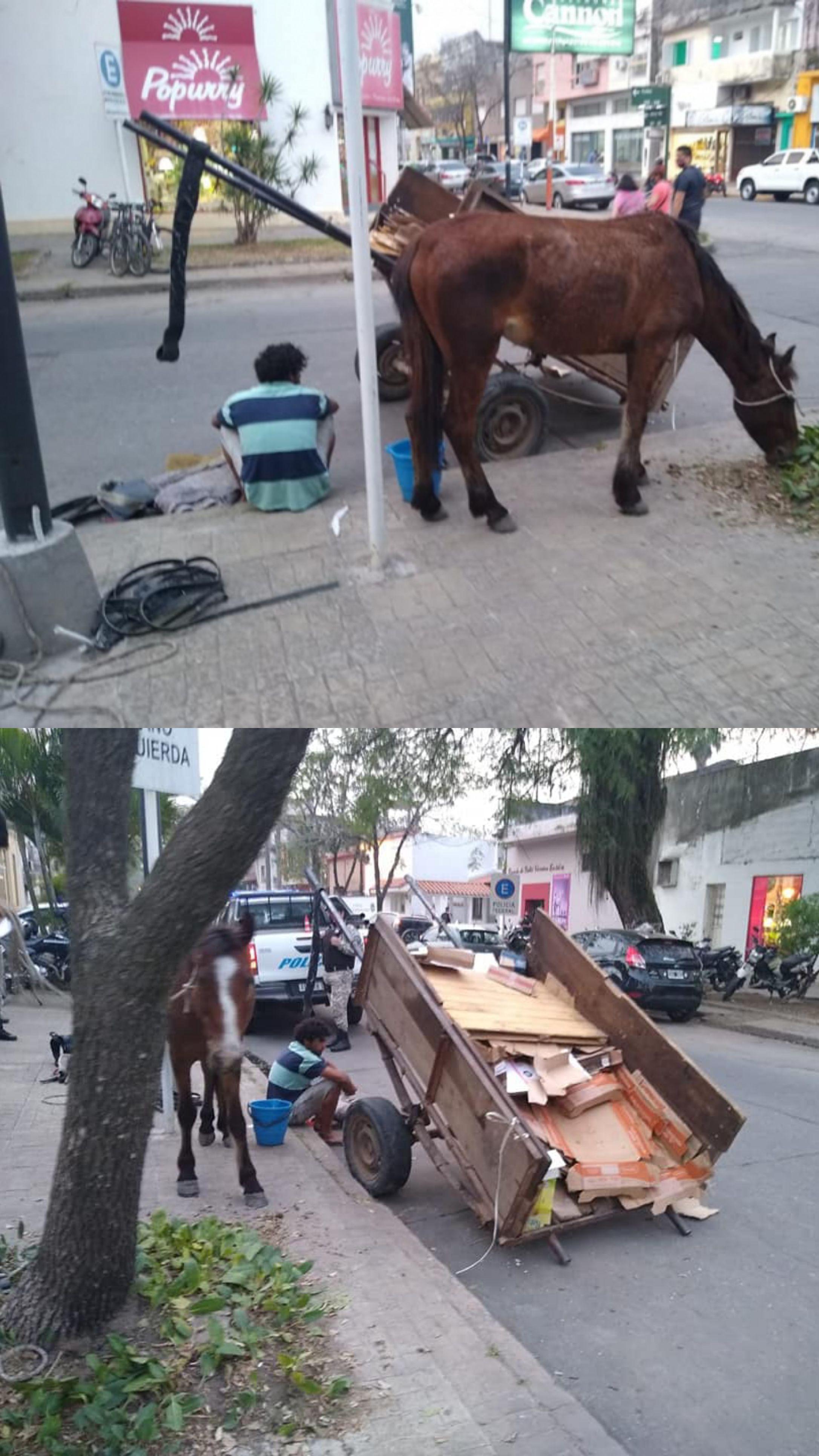 Resistencia: Estando ebrio manejaba un carro, chocó contra el cordón y el caballo cayó en pleno centro.
