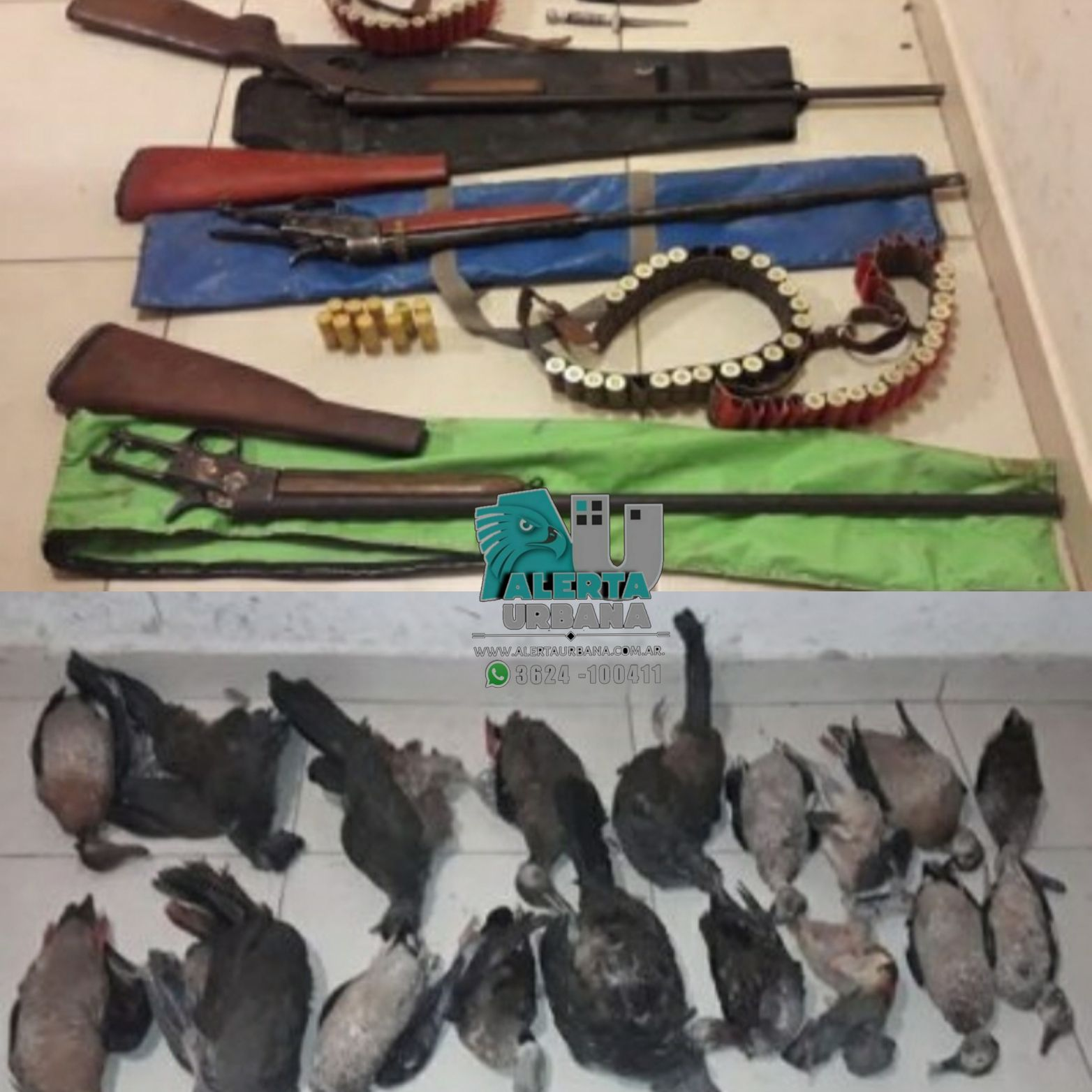 Quitilipi: secuestran 18 aves y armas de fuego