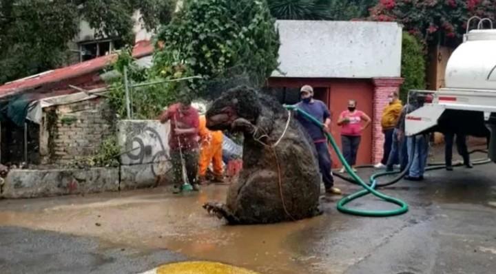 Una rata gigante y basura provocaron la muerte de Doña Mary, tras inundarse su casa por la lluvia en CDMX