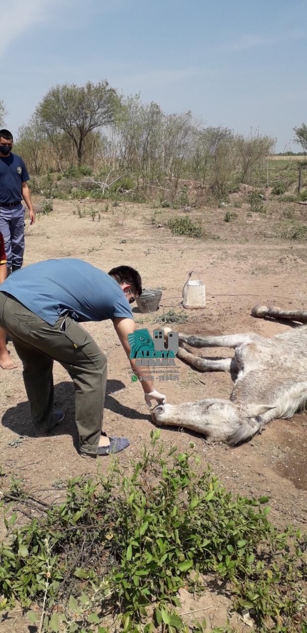 Tres Isletas: Rescatan un caballo que era maltratado por un ladrillero.