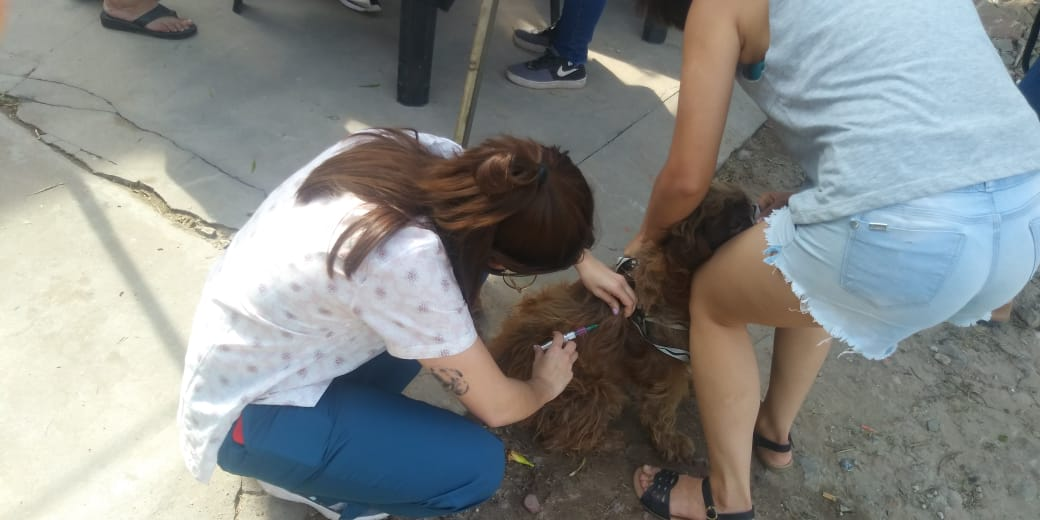 Barranqueras: Municipio inició campaña de vacunación antirrábica