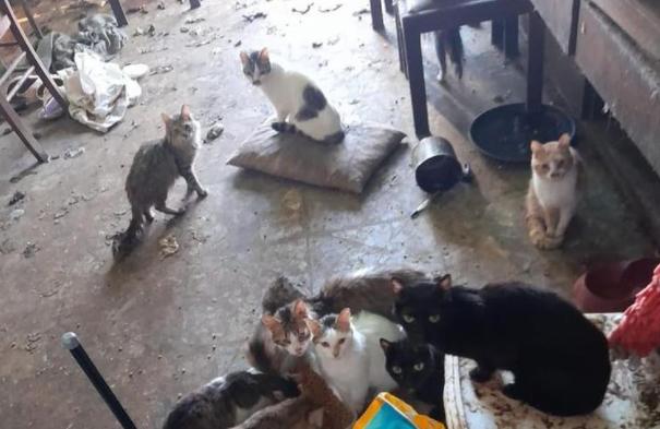 Murió una mujer y dejó una casa abandonada con más de 30 gatos y dos perros