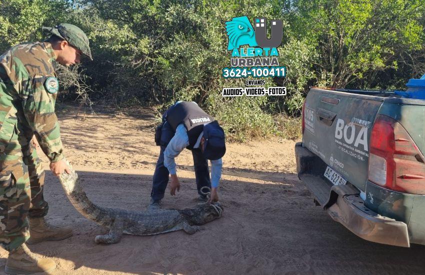 La Brigada Operativa Ambiental rescató un puma y un yacaré