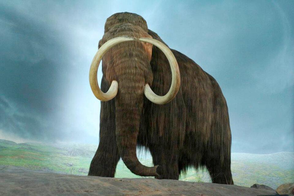 Intentan resucitar al extinto mamut lanudo