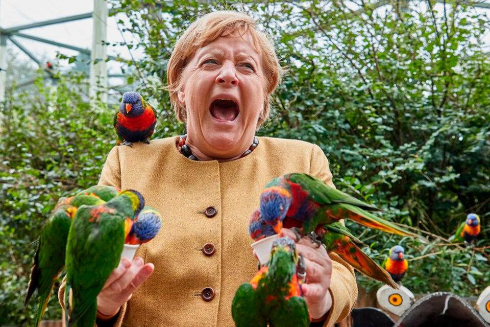 Angela Merkel y el picotazo de un loro: una imagen que se volvió viral