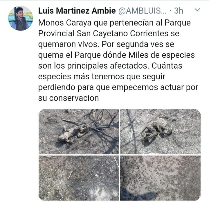 Incendios: Las tremendas imágenes de monos calcinados por el fuego en Corrientes.