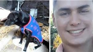Habló el hombre que colgó al perro que mordió a su hijo: