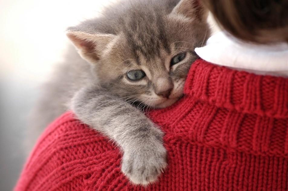 Descubren cómo establecer un mejor vínculo entre las personas y sus gatos