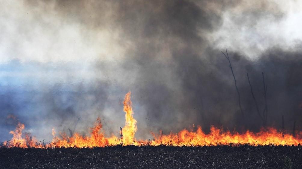 El fuego arrasó 300 mil hectáreas y devastó flora y fauna de los humedales