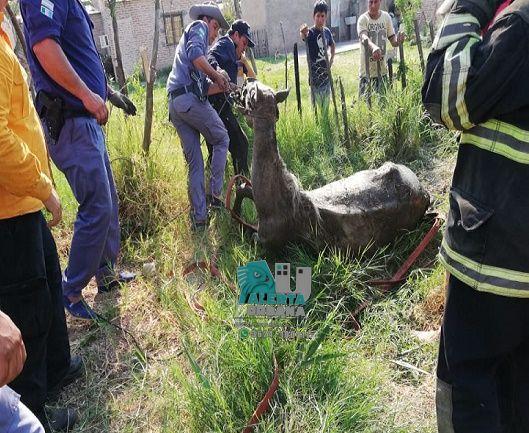 San Martín: Rescatan un caballo de un pozo