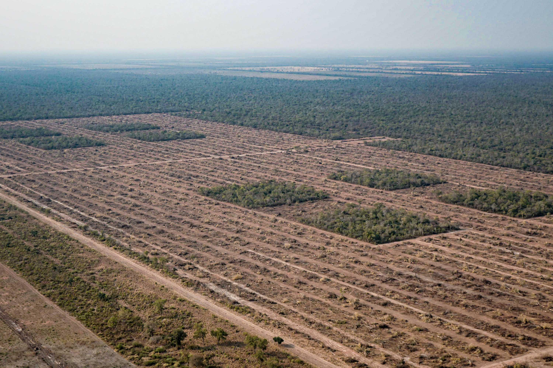 Monitoreo satelital de Greenpeace revela que se habrían desmontado 42 mil hectáreas durante la pandemia