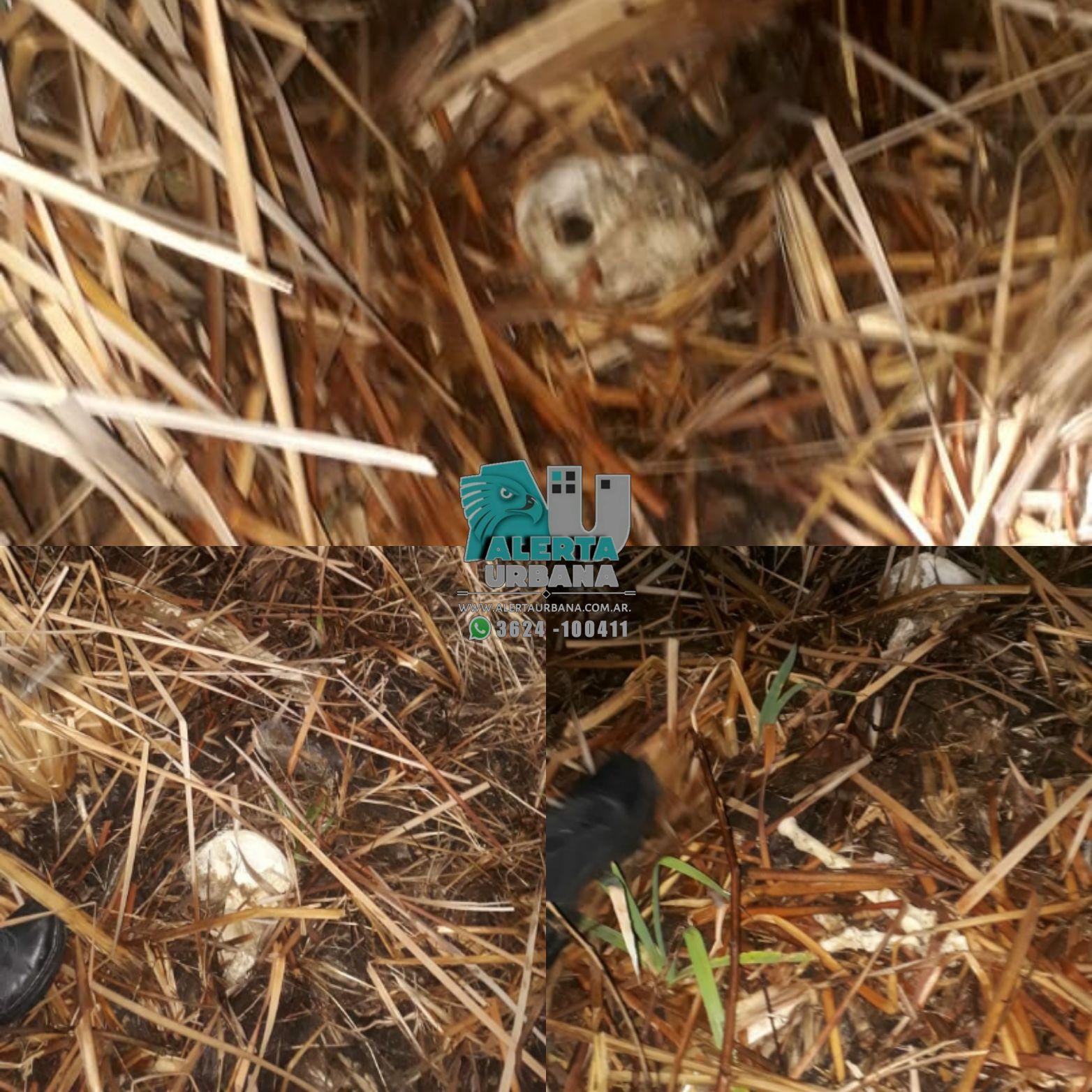 San Martín: hallan restos óseos en un campo