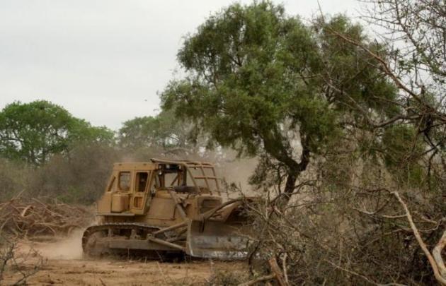Se suspendieron todos los permisos de desmonte en la provincia del Chaco por una orden judicial.