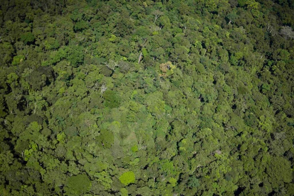 Inédito. La empresa que produce yerba en la Argentina y paga por el agua de lluvia