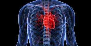 Salud cardiovascular y pandemia: diez consejos para cuidar el corazón